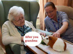 guinea pig grandma copy.jpg