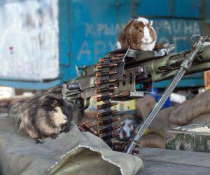 guinea pig machine gun.jpg