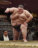 OIP.jpeg sumo.jpeg